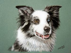 Hundeportraits in Pastellkreide / Dog portraits in soft pastels (16 cm x 24 cm)