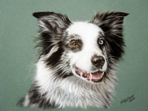 Hundeportraits in Pastellkreide / Dog portraits in soft pastels (16 cm x 24 cm)