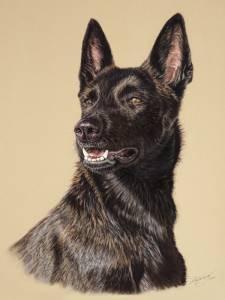 Hundezeichnungen in Pastellkreide / Dog paintings in soft pastels (30 cm x 40 cm)