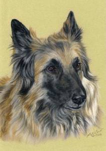 Hundezeichnungen in Pastellkreide / Dog paintings in soft pastels (16 cm x 24 cm)
