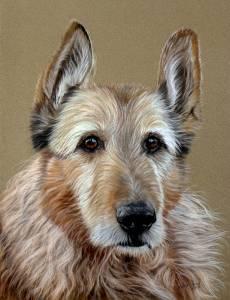 Hundezeichnungen in Pastellkreide / Dog paintings in soft pastels (24 cm x 32 cm)