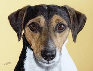 Hundeportraits in Pastellkreide / Dog portraits in soft pastels (24 cm x 32 cm)