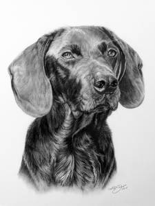Hundeportraits in Kohle / Dog portraits in charcoal (30 cm x 40 cm)