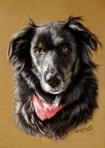 Hundezeichnungen in Pastellkreide / Dog paintings in soft pastels (16 cm x 24 cm)