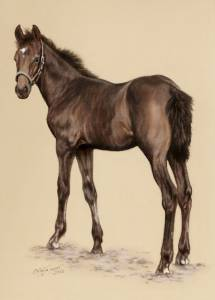 Pferdezeichnungen in Pastellkreide / Horse paintings in soft  pastels (24 cm x 32 cm)