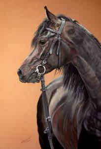 Pferdeportraits in Pastellkreide / Horse portraits in soft pastels (50 cm x 65 cm)