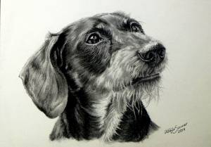 Hundezeichnungen in Kohle / Dog paintings in charcoal (15 cm x 21 cm)
