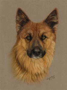 Hundeportraits in Pastellkreide / Dog paintings in soft pastels (18 cm x 24 cm)