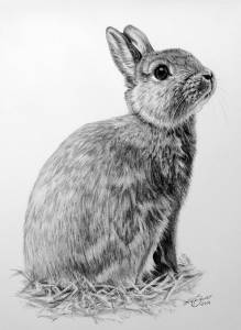 Hasenzeichnungen in Kohle / Rabbit paintings in charcoal (21 cm x 30 cm)