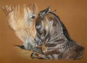 Pferdezeichnungen in Pastellkreide / Horse paintings in soft pastels (40 cm x 50 cm)