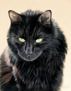 Katzenzeichnungen in Pastellkreide / Cat portraits in soft pastels (30 cm x 40 cm)
