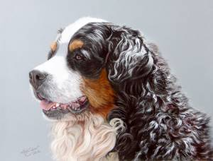 Hundezeichnungen in Pastellkreide / Dog paintings in soft pastels (24 cm x 32 cm)