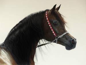 Araberhengst Gazal Al Shaqab in Pastellkreide / Arabian stallion Gazal Al Shaqab in soft  pastels (40 cm x 50 cm)