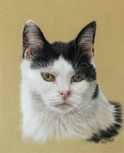 Katzenportraits in Pastellkreide / Cat portraits in soft pastels (24 cm x 32 cm)