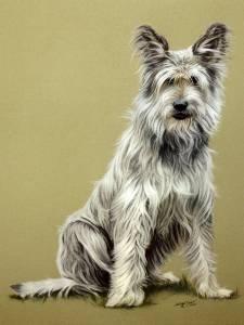 Hundeportraits in Pastellkreide / Dog portraits in soft pastels (40 cm x 50 cm)