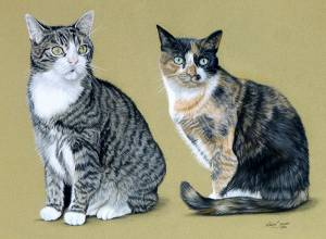 Katzenportraits in Pastellkreide / Cat paintings in soft pastels (30 cm x 40 cm)