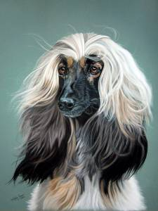 Hundezeichnungen in Pastellkreide / Dog paintings in soft pastels (50 cm x 65 cm)