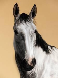 Pferdeportraits in Pastellkreide / Horse paintings in soft  pastels (30 cm x 40 cm)