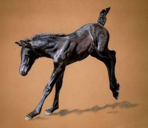 Pferdeportraits / Horse portraits - Friese / Frisian horse JIMKJE VOM SEENLAND
