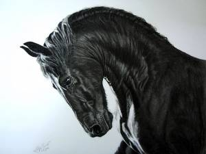 Pferdezeichnungen / Horse paintings - Friese / Frisian horse JOUKE