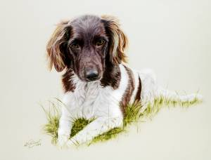 Hundeportraits in Pastellkreide / Dog portraits in soft pastels (24 cm x 32 cm)