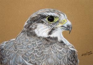 Wildtiere in Pastellkreide / Wildlife in soft pastels (16 cm x 24 cm) - Special thanks to Emmanuel Keller