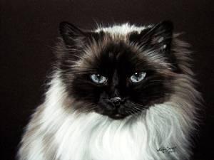 Katzenzeichnungen in Pastellkreide / Cat drawings in soft pastels (16 cm x 24 cm)