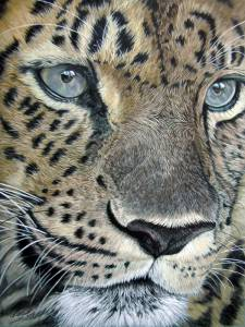 Wildtiere in Pastellkreide / Wildlife in soft pastels (30 cm x 40 cm)