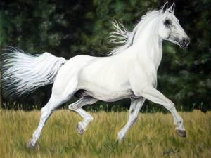 Pferdezeichnungen / Horse paintings - Lipizzaner / Lipizzan horse BATOSA