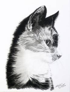 Katzenzeichnungen in Kohle (15 cm x 21 cm)