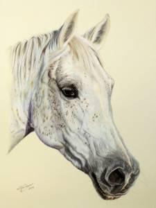 Pferdeportraits in Pastellkreide / Horse portraits in soft pastels (24 cm x 32 cm)