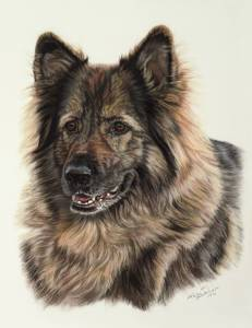 Hundezeichnungen in Pastellkreide / Dog paintings in soft pastels (30 cm x 40 cm)