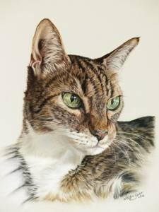 Katzenzeichnungen in Pastellkreide / Cat portraits in soft pastels (24 cm x 32 cm)