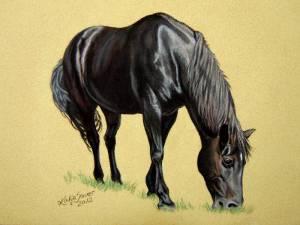 Pferdeportraits in Pastellkreide / Horse portraits in soft pastels (16 cm x 24 cm)