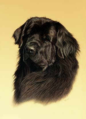 Hundeportraits in Pastellkreide / Dog paintings in soft pastels (50 cm x 70 cm)