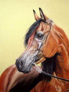 Pferdeportraits / Horse portraits - Araber / Arabian horse PELENG
