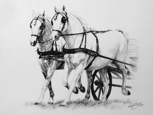 Pferdezeichnungen in Kohle / Horse paintings in charcoal (21 cm x 30 cm)