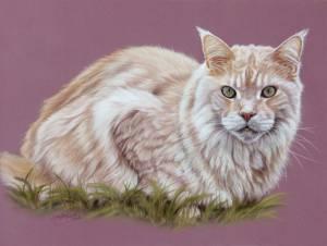 Katzenzeichnungen in Pastellkreide (30 cm x 40 cm)
