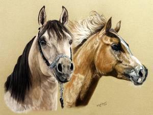 Pferdezeichnungen in Pastellkreide / Horse paintings in soft  pastels (30 cm x 40 cm)