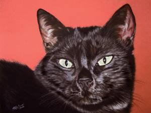 Katzenzeichnungen in Pastellkreide / Cat drawings in soft pastels (40 cm x 50 cm)