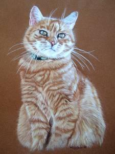 Katzenzeichnungen / Cat paintings - SAMMY ♥