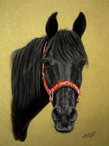 Pferdezeichnungen / Horse paintings - Shagya Araber / Shagya Arabian horse SHAHIN