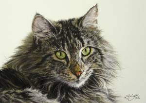 Katzenzeichnungen in Pastellkreide / Cat portraits in soft pastels (16 cm x 24 cm)