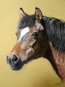 Pferdeportraits in Pastellkreide / Horse portraits in soft pastels (30 cm x 40 cm)