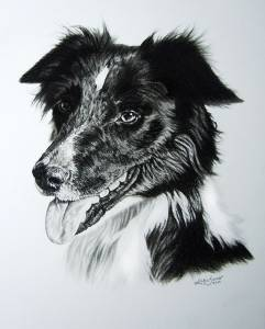 Hundezeichnungen in Kohle / Dog paintings in charcoal (30 cm x 40 cm)