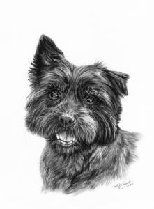Hundezeichnungen in Kohle / Dog paintings in charcoal (21 cm x 30 cm)
