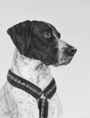 Hundezeichnungen in Kohle / Dog paintings in charcoal (30x40)