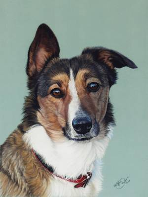 Hundezeichnungen in Pastellkreide / Dog drawings in soft pastels (24 cm x 32 cm)