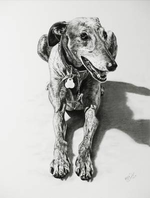 Hundezeichnungen in Kohle / Dog paintings in charcoal (40 cm x 50 cm)