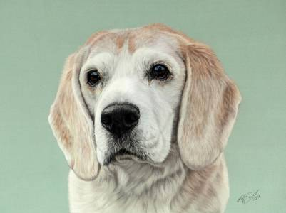 Hundeportraits in Pastellkreide / Dog drawings in soft pastels (24 cm x 32 cm)
